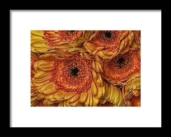 Daisy Framed Print featuring the photograph Daisy Daisy by Keith Gondron