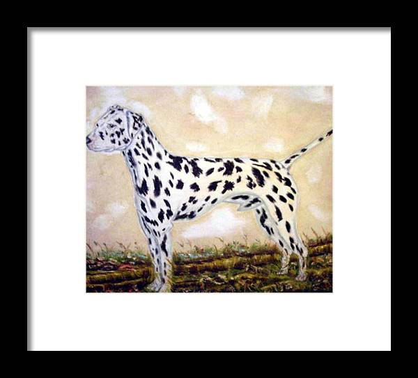 Large Dalmatian Male Framed Print featuring the photograph Dalmatian by Pat Mchale