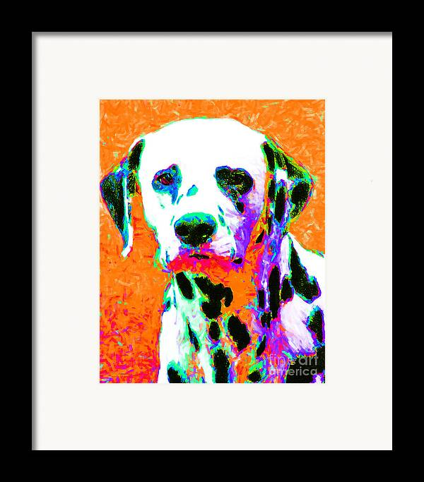 Animal Framed Print featuring the photograph Dalmation Dog 20130125v2 by Wingsdomain Art and Photography