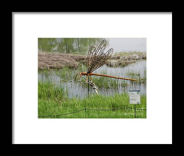 Giant Damsel Fly Framed Print featuring the photograph Damsel Fly by Terry Hunt