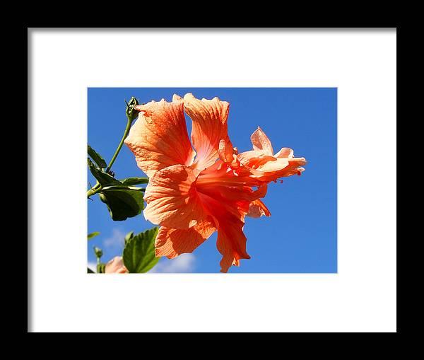 Karen Zuk Rosenblatt Art And Photography Framed Print featuring the photograph Dancing Hibiscus by Karen Zuk Rosenblatt
