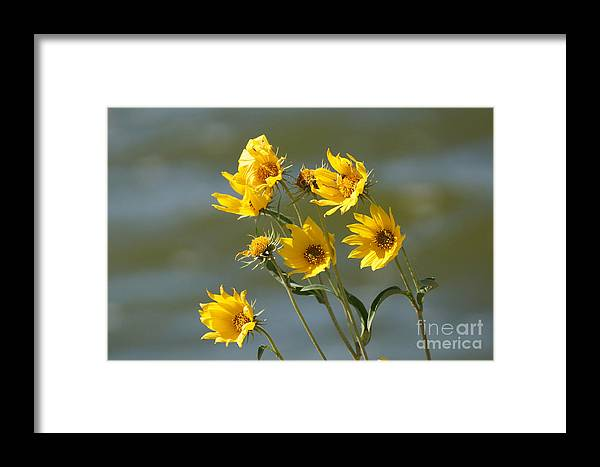 Yellow Framed Print featuring the photograph Dancing In The Wind by Lori Tordsen