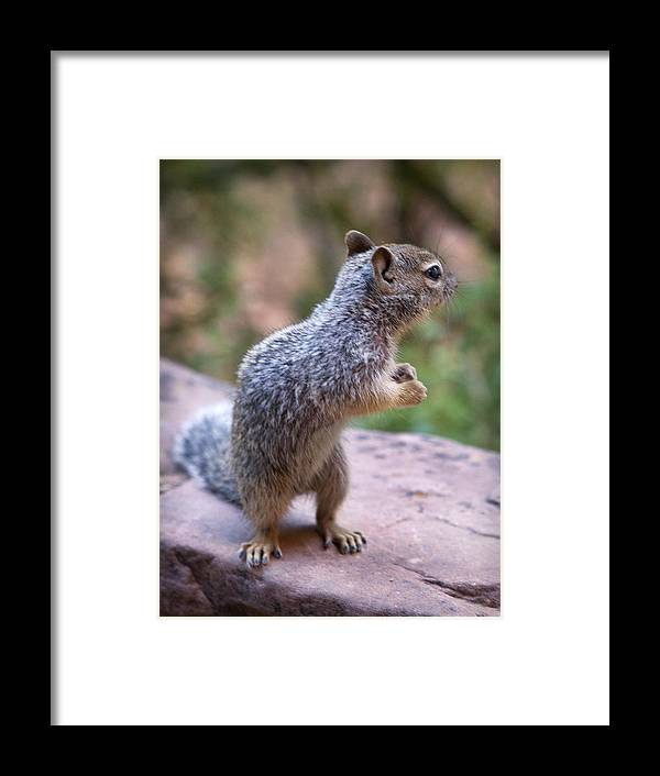 Mountain Framed Print featuring the photograph Dancing Squirrel by Marilyn Hunt