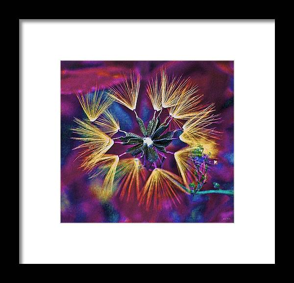 Dandelion Framed Print featuring the photograph Dandelion Fireworks 003 by George Bostian