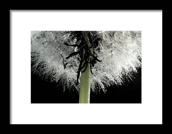 Dandelion Framed Print featuring the photograph Dandelion by Tod Ramey