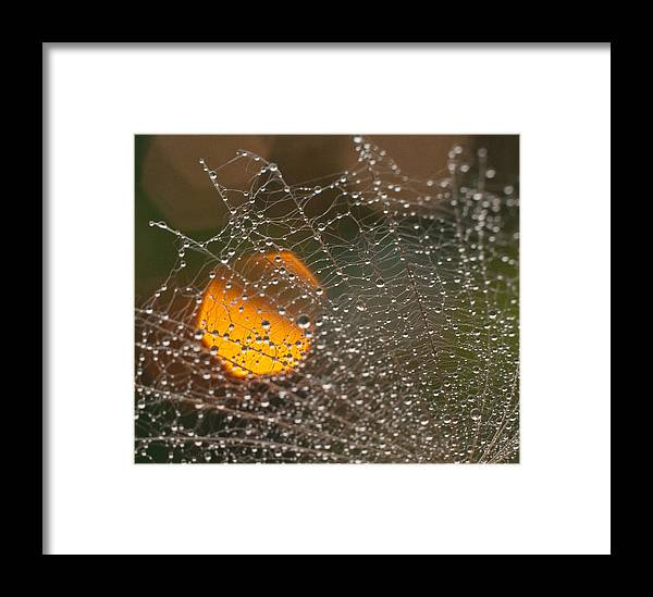 Close-up Framed Print featuring the photograph Dandelion With Droplets Close-up by Olga Tkachenko