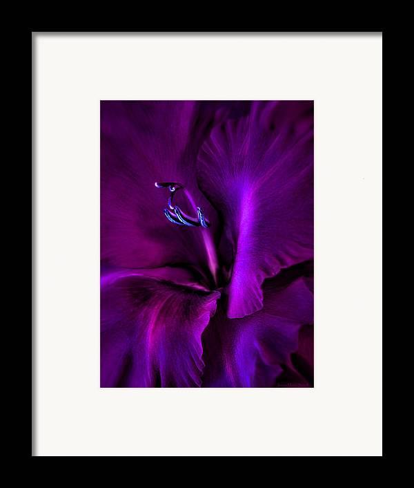 Gladiola Framed Print featuring the photograph Dark Knight Purple Gladiola Flower by Jennie Marie Schell