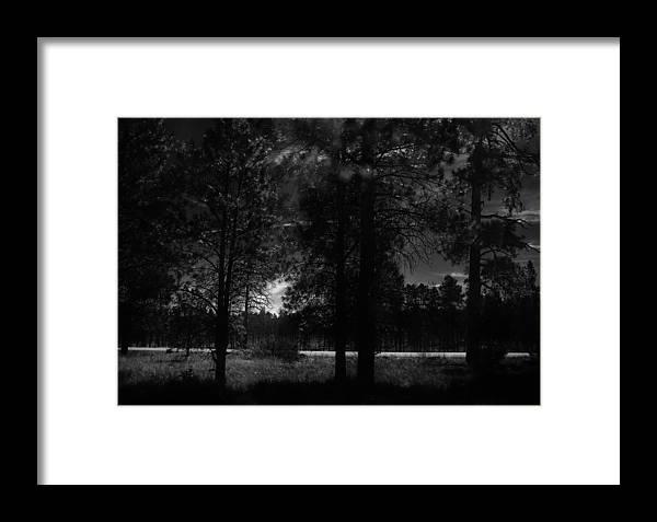 Forest Framed Print featuring the photograph Darkenwalk by D Goodman