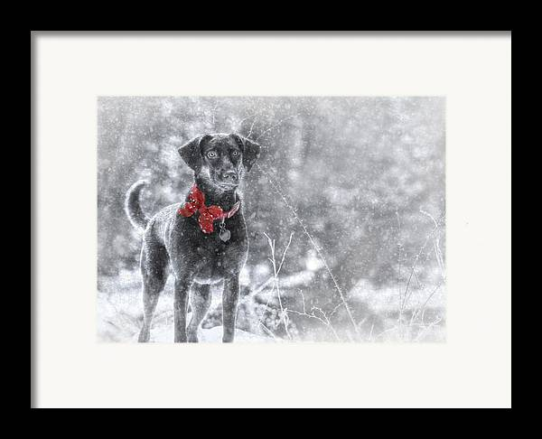 Sienna Framed Print featuring the photograph Dashing Through The Snow by Lori Deiter