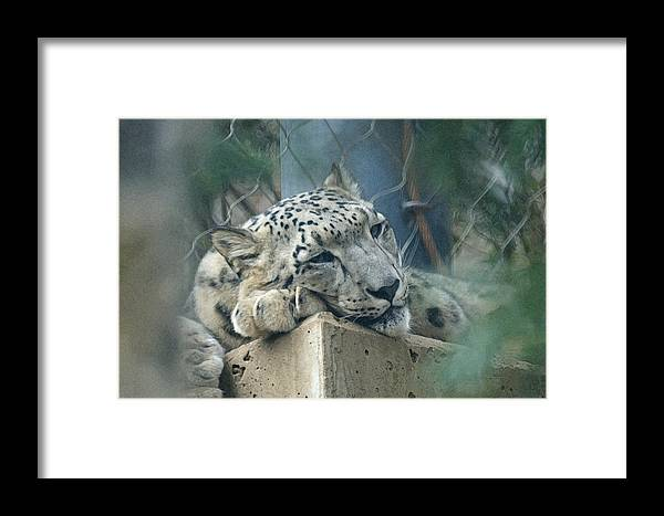 Animals Framed Print featuring the digital art Day Dream by Ernie Echols