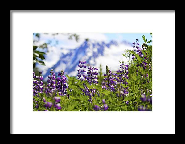 Chugach Framed Print featuring the photograph Day Dream by Scott Slone