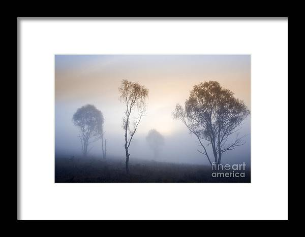 Lone Tree Framed Print featuring the photograph Cannock Chase Day Is Dawning by Ron Evans