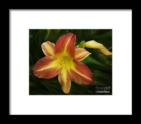 Daylily Framed Print featuring the photograph Daylily by Louise Reeves