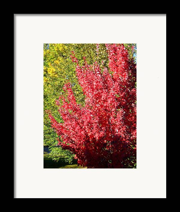 Leaves Framed Print featuring the photograph Days Like This by Kathy Bassett