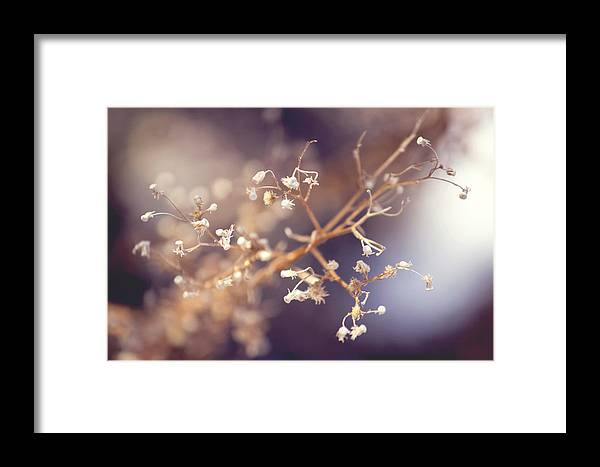 Dead Baby's Breath Framed Print