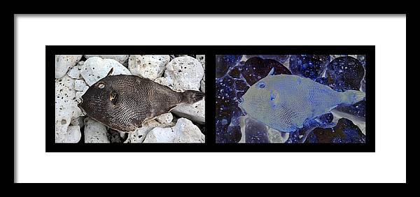 New Life Framed Print featuring the digital art Dead Fish Lives 5b by Doug Hoover