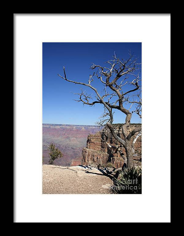 Grand Canyon Framed Print featuring the photograph Dead Tree At The View Point by Christiane Schulze Art And Photography