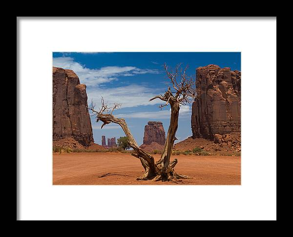 Dead Framed Print featuring the photograph Dead Wood In Monument Valley by Andreas Hohl