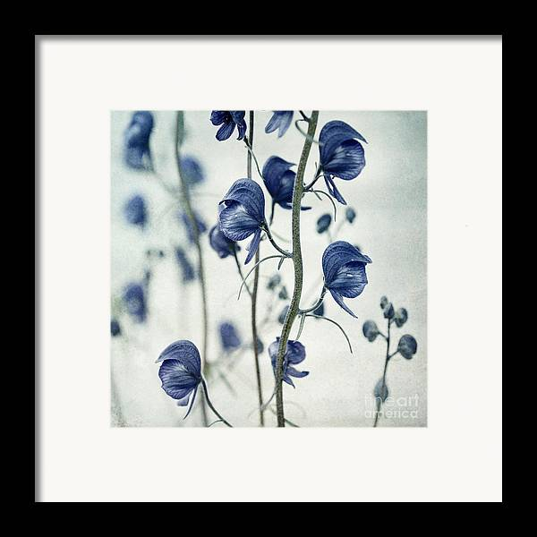 Monkhood Framed Print featuring the photograph Deadly Beauty by Priska Wettstein