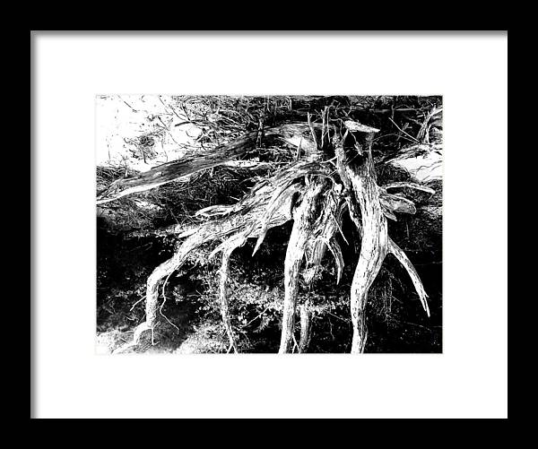 Tree Framed Print featuring the photograph Deadtree by Bill Rush