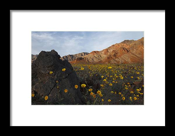 Death Valley Framed Print featuring the photograph Death Valley Spring 1 by Susan Rovira