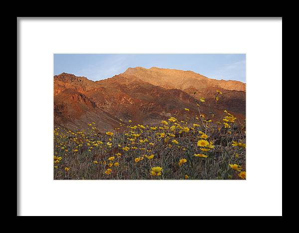 Death Valley Framed Print featuring the photograph Death Valley Spring 2 by Susan Rovira