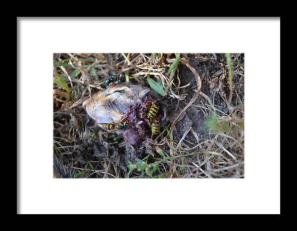 Chipmunk Framed Print featuring the photograph Decapitated by Lisa Thomas