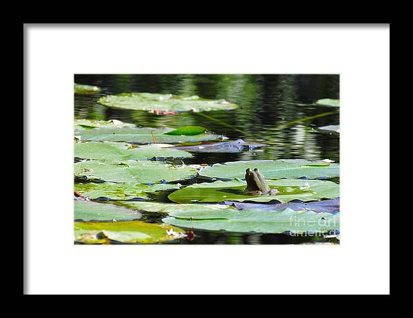 Frog Framed Print featuring the photograph Decisions decisions by Rrrose Pix