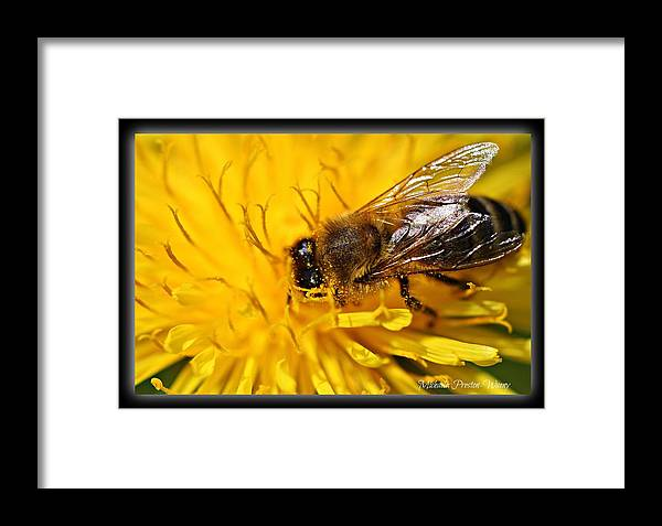 Nature Framed Print featuring the photograph Deep In There by Michaela Preston