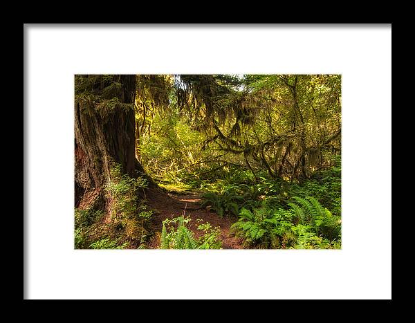 Hoh Rain Forest Framed Print featuring the photograph Deep Into The Hoh Rain Forest by Rich Leighton
