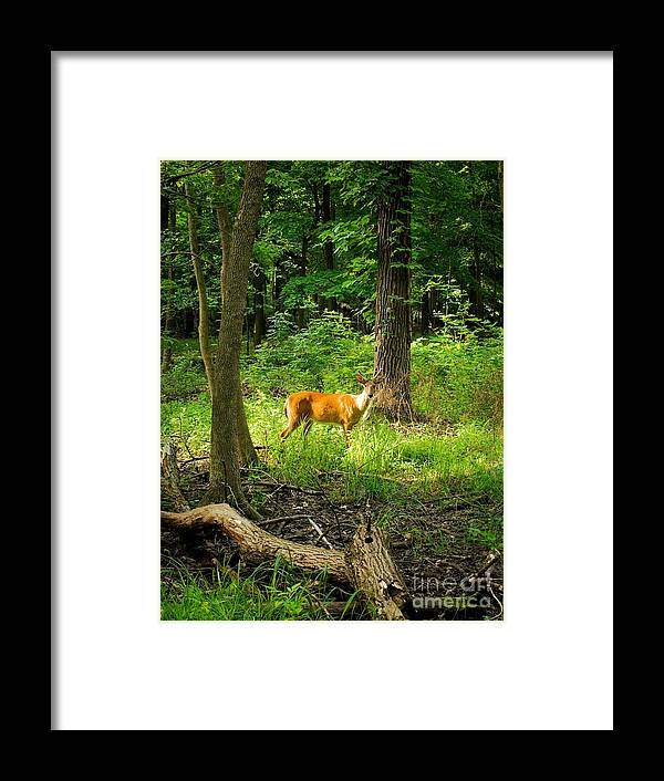 Deer Framed Print featuring the photograph Deer In The Woods by Glenn Morimoto