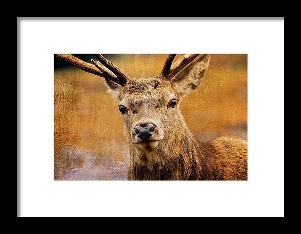 Alert Framed Print featuring the photograph Deer On Canvas by Derek Beattie