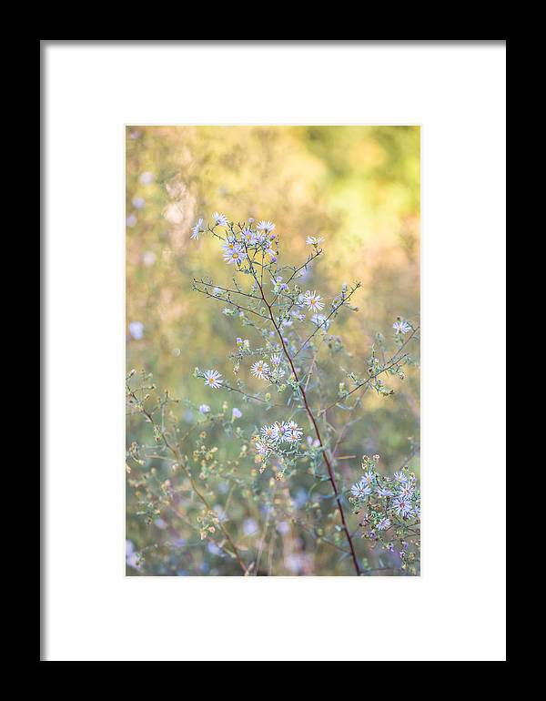 Flower Framed Print featuring the photograph Delicate by Amy Stonebraker