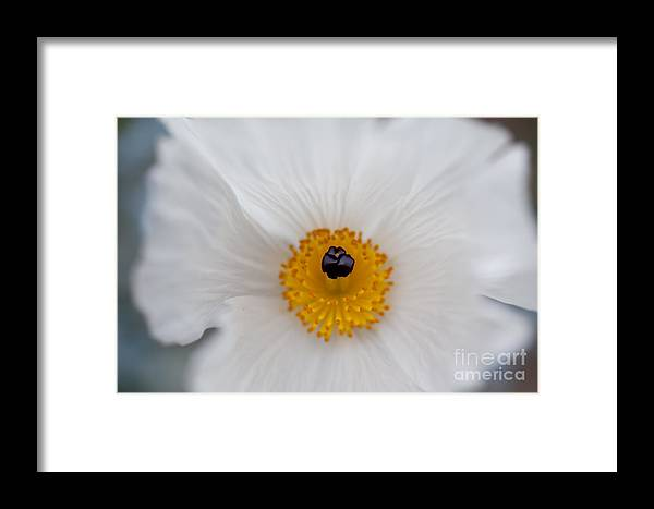 Hawaii Framed Print featuring the photograph Delicate by Charmian Vistaunet