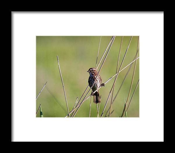 Bird Framed Print featuring the photograph Delicate Perch by Steve McKinzie