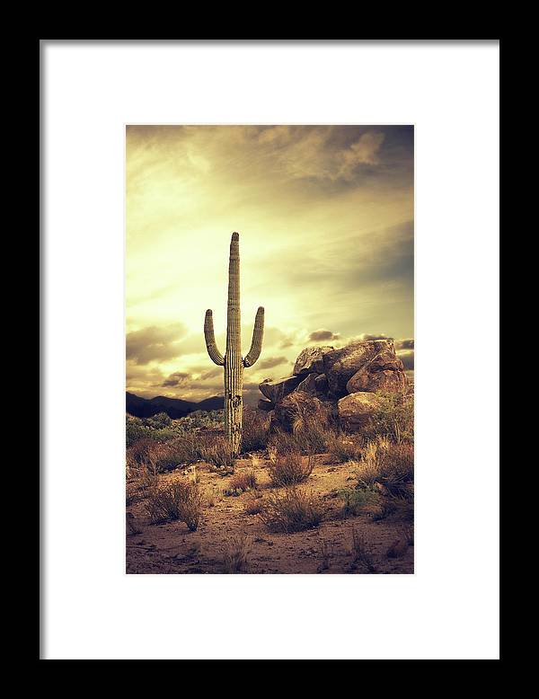 Saguaro Cactus Framed Print featuring the photograph Desert Cactus - Classic Southwest by Hillaryfox