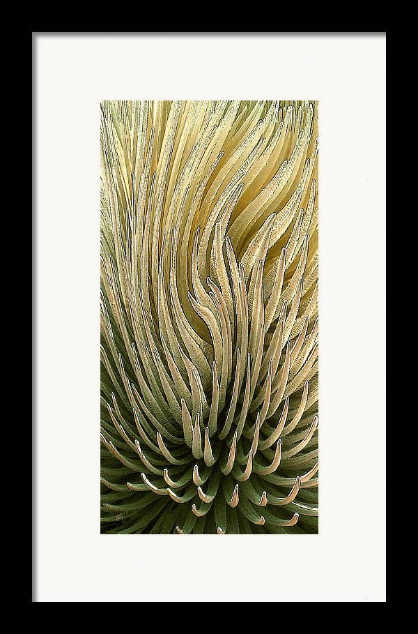 Succulent Framed Print featuring the photograph Desert Green by Ben and Raisa Gertsberg