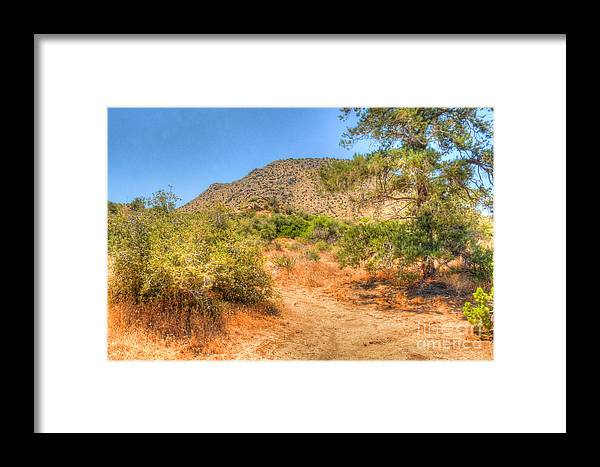 California Framed Print featuring the photograph Desert Pine by Deborah Smolinske
