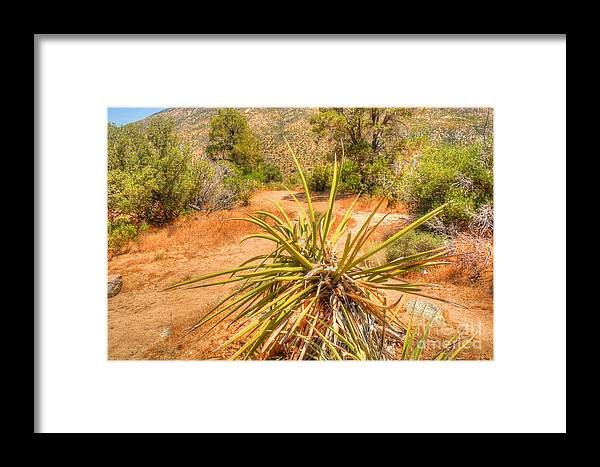 California Framed Print featuring the photograph Desert Reds And Greens by Deborah Smolinske