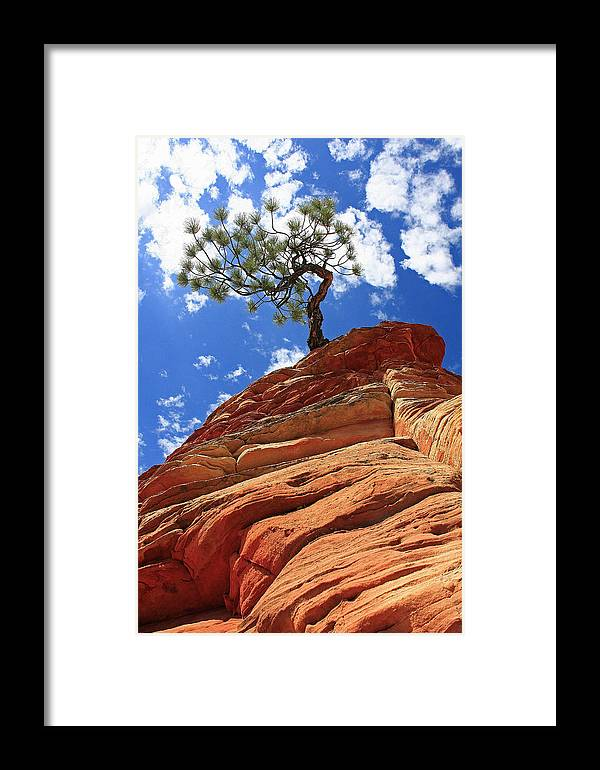 Nature Framed Print featuring the photograph Determination by Douglas Settle