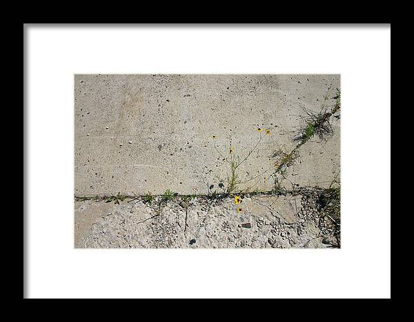 Pavement Framed Print featuring the photograph Determined Life by Nina Fosdick