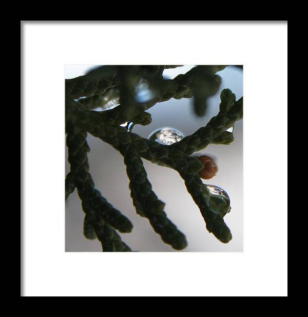 Mountains Framed Print featuring the photograph Dew Mountain Collection by Dennis Galloway