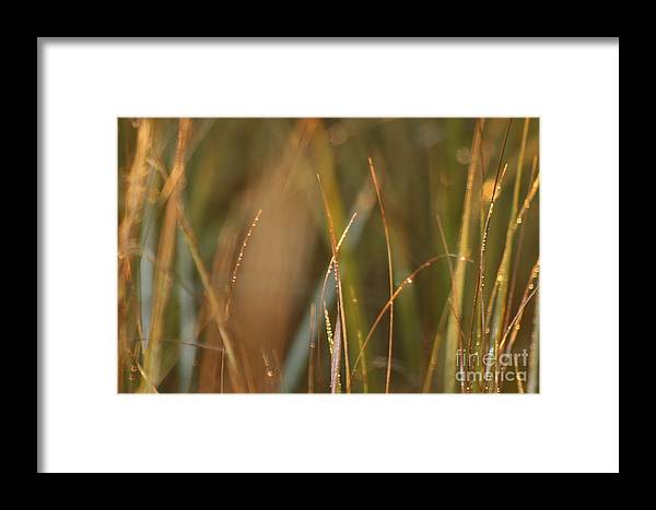 Dew Framed Print featuring the photograph Dewy Grasses by Nadine Rippelmeyer