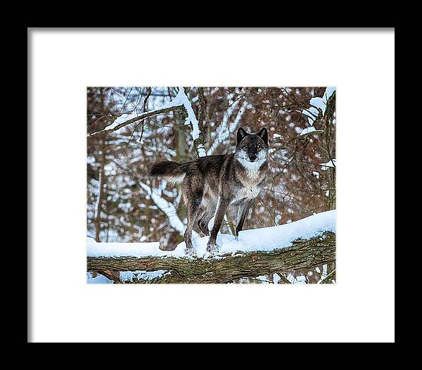 Animal Framed Print featuring the photograph Dharma Watch by Douglas Perry