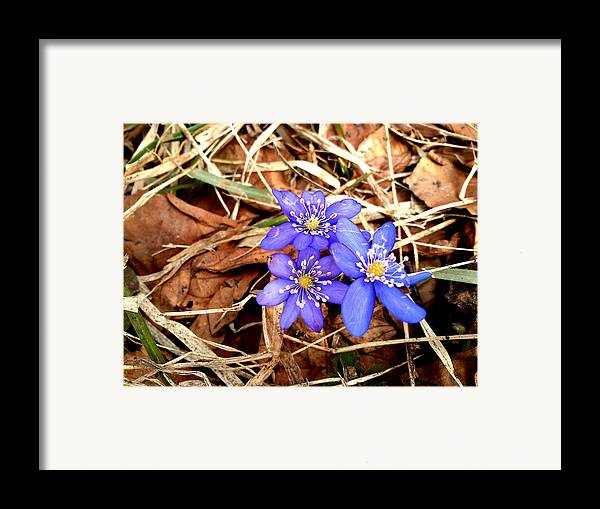 Blue Framed Print featuring the photograph Diamonds by Lucy D