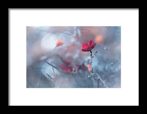 Red Framed Print featuring the photograph Diaprures Va?ga?tales by Fabien Bravin