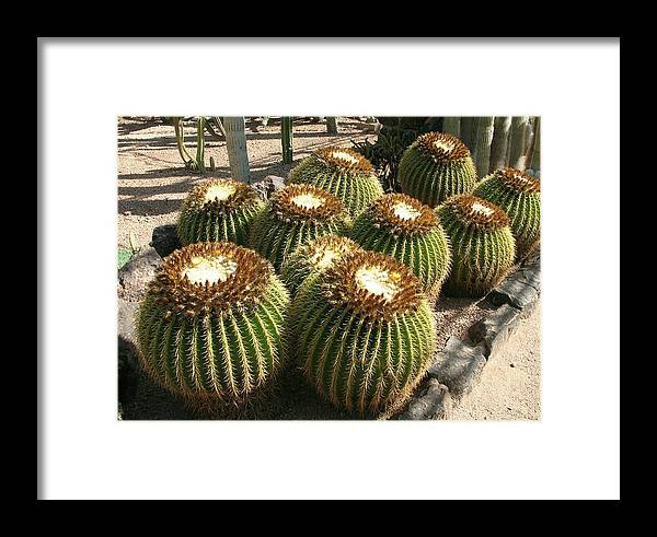 Green Cactus Framed Print featuring the photograph Mother-in-law's Cushion by Christiane Schulze Art And Photography