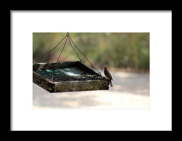 Birds Framed Print featuring the photograph Dinner Time by Kristie Briones