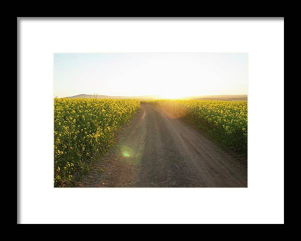 Tranquility Framed Print featuring the photograph Dirt Road In Field Of Flowers by Luka