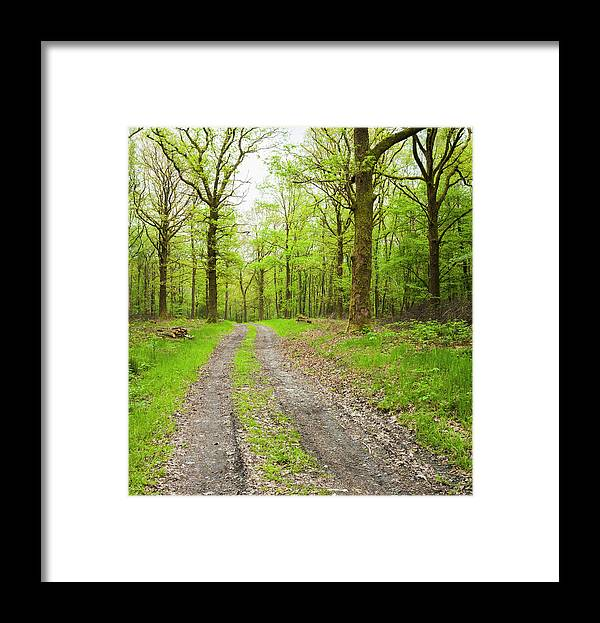 Scenics Framed Print featuring the photograph Dirt Road Surrounded By Trees In by Mike Kemp Images